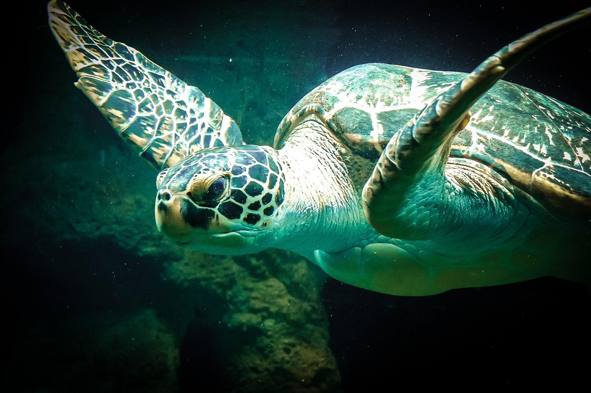 Tortugas marinas en México