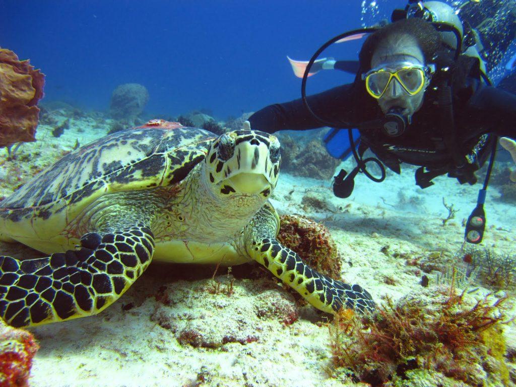 tortugas marinas en arrecife  con un buzo