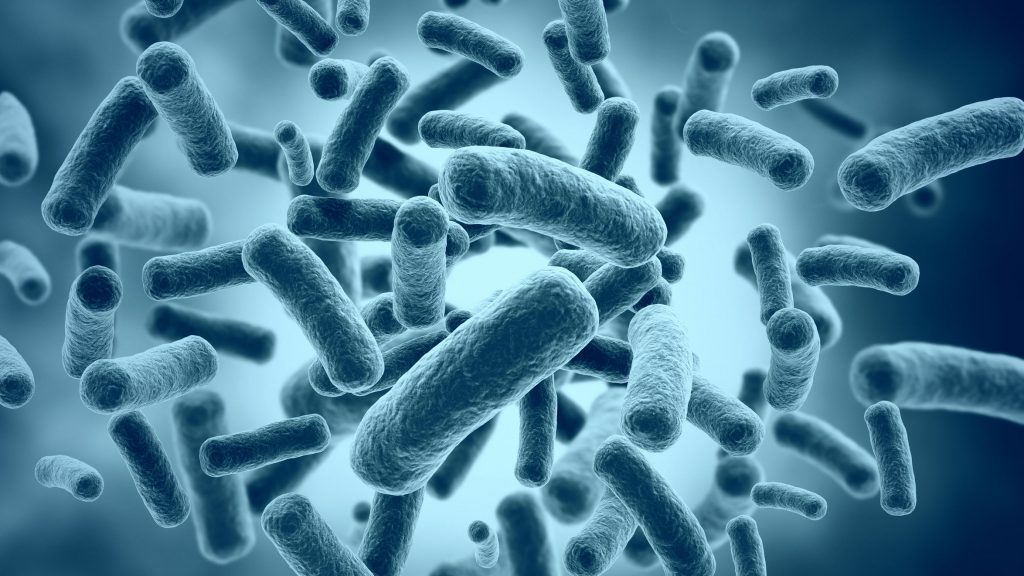 porque es importante consumir probióticos